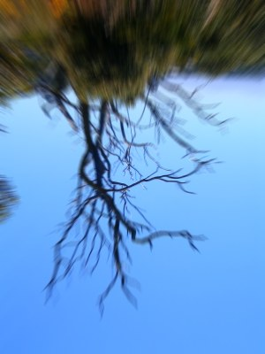 blur-upside-down-tree
