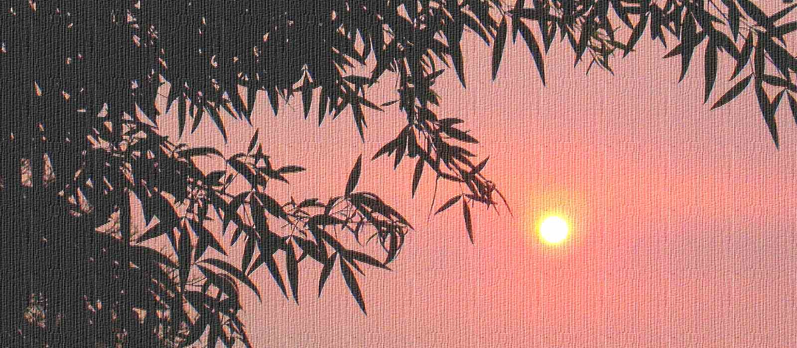 leaves-sunset