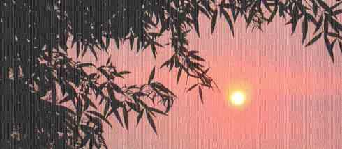 leaves-sunset