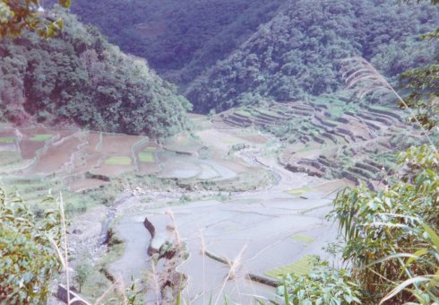 Rice Terraces 1996 a