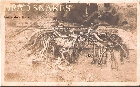 dead snakes logo